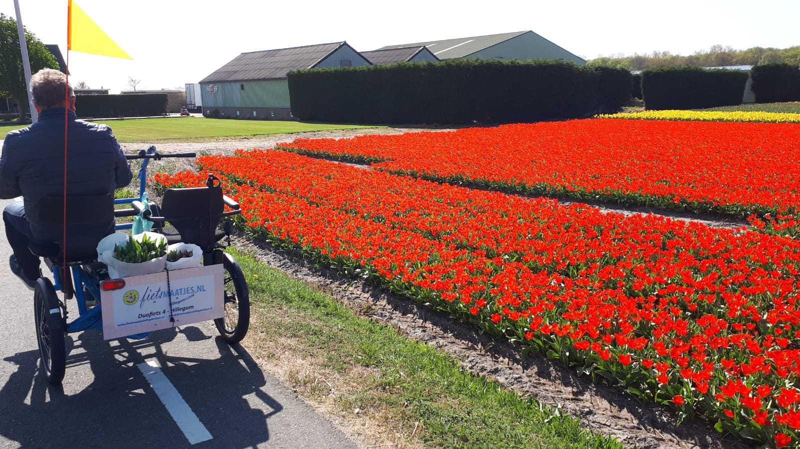 Foto-Ita-duofiets-4-bij-tulpenvelden-nog-even-voor-het-goede-doel